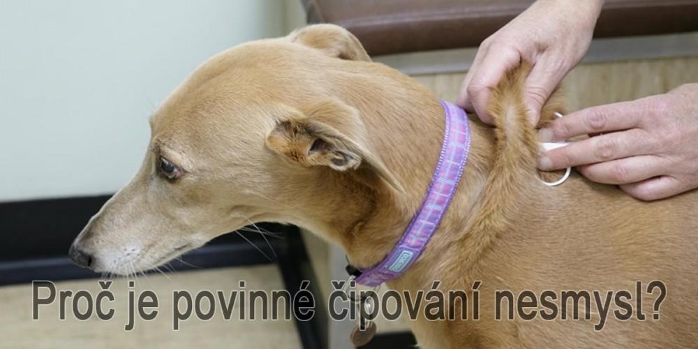Čipování psa v praxi