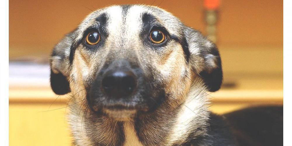 Pes se bojí a má strach, projevení agrese