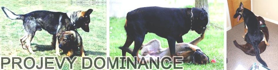 Projevy dominance u psa
