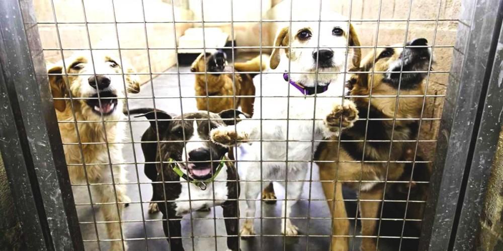Psi v útulku před adopcí