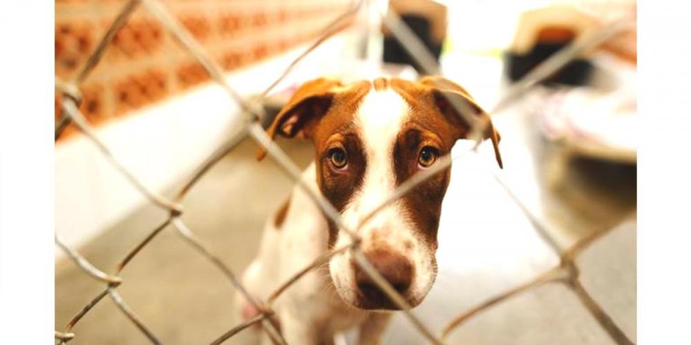Smutný pes za plotem