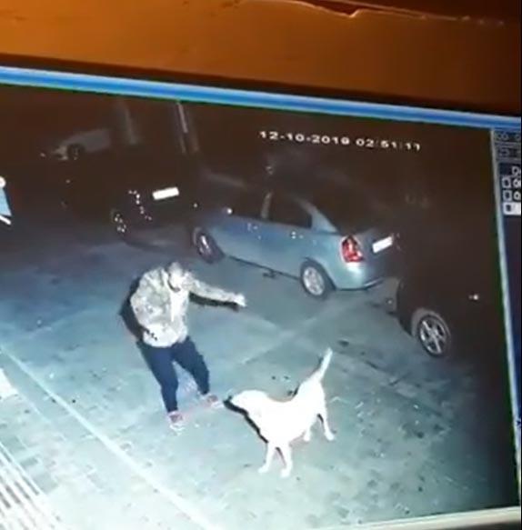 První shledání muže se psem brzy ráno, skrytá kamera