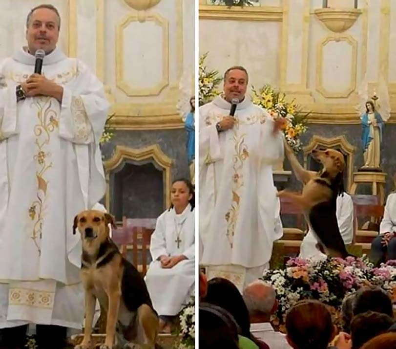 Kněz bere na mši pouliční psy, které nabízí k adopci. Do kostela se nyní lidé nemohou vejít