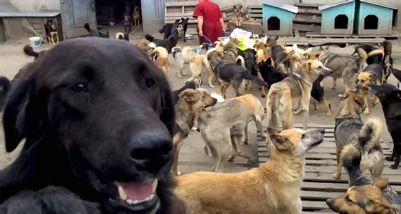 Psi v útulku