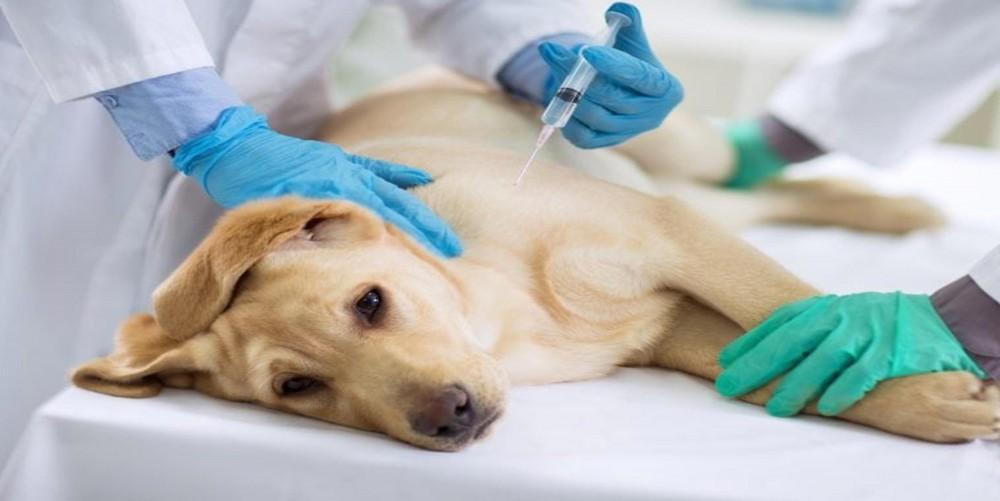 Experimenty na psovi