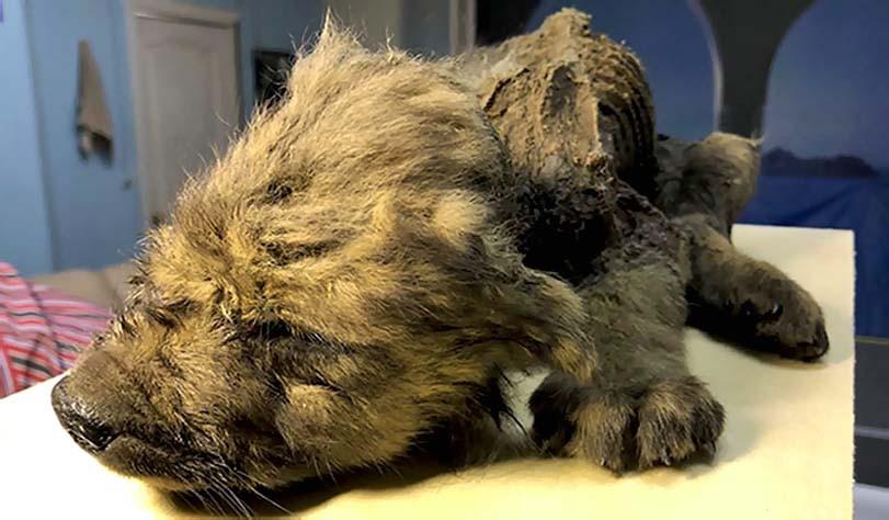 Nejstarší štěně na světě