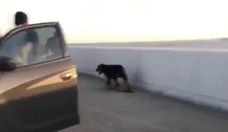 Pes na krajnici