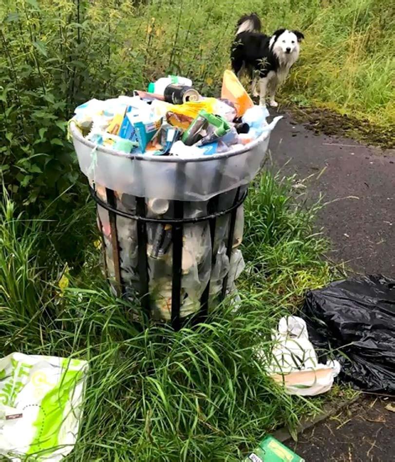 Uklízení odpadků psem