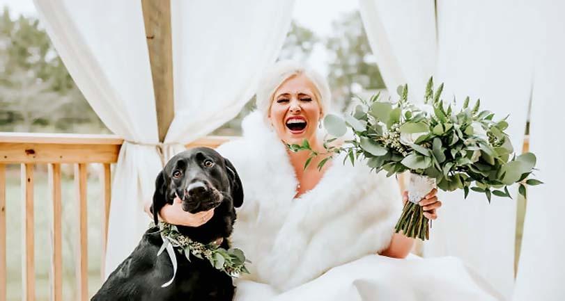Labradorský retrívr a smích nevěsty