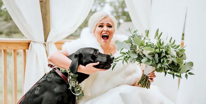 Labrador chce sežrat květinu