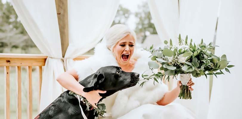Labrador žere květinu nevěsty