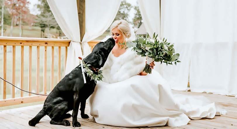 Labrador dává pusu nevěstě