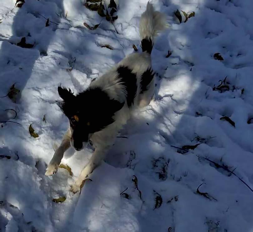 Malé plemeno psa v zimě
