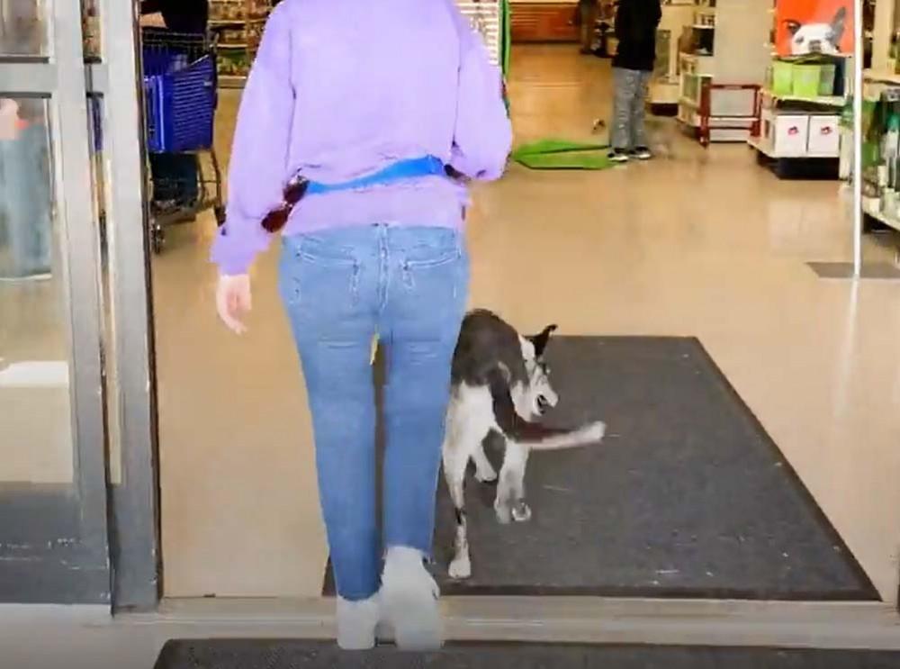 Nakupování se psem