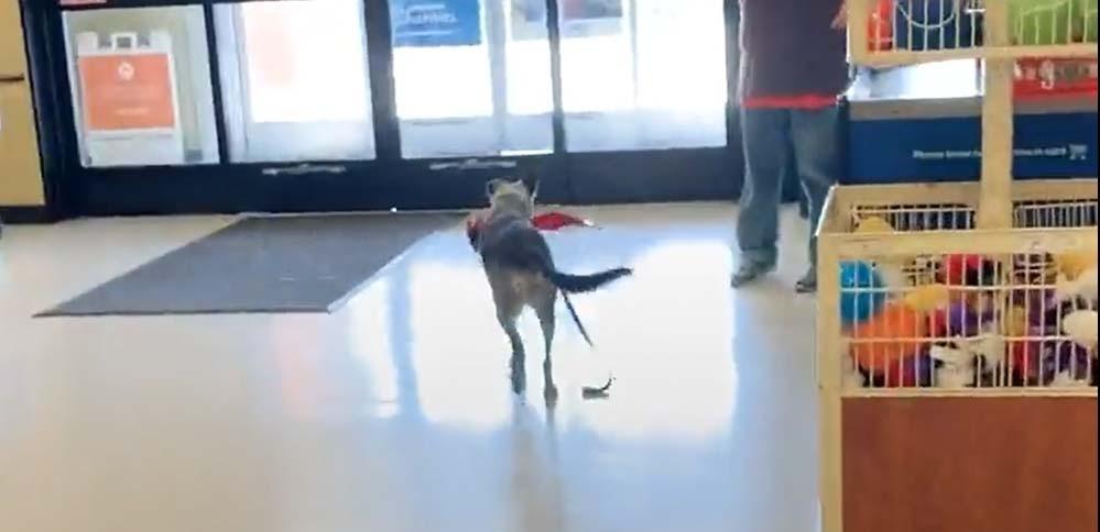 Pes v obchodě