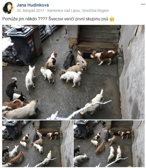 Záchrana psů z množírny v Kamenicích