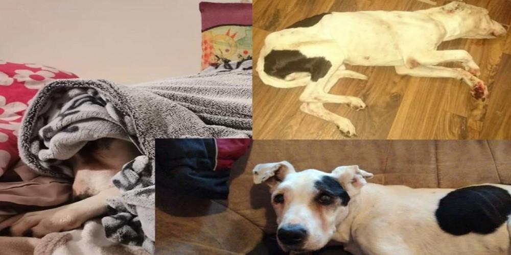 Fenka psa a její příběh