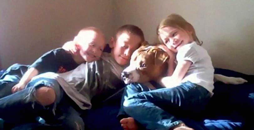 Pitbul doma s dětmi