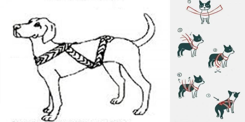 Návod v bodech, zklidňující bandáž pro psy