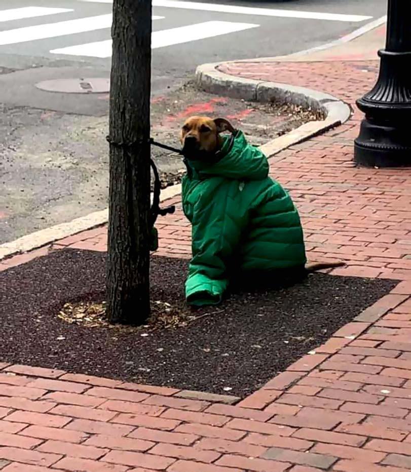 Pes v zimě, bunda