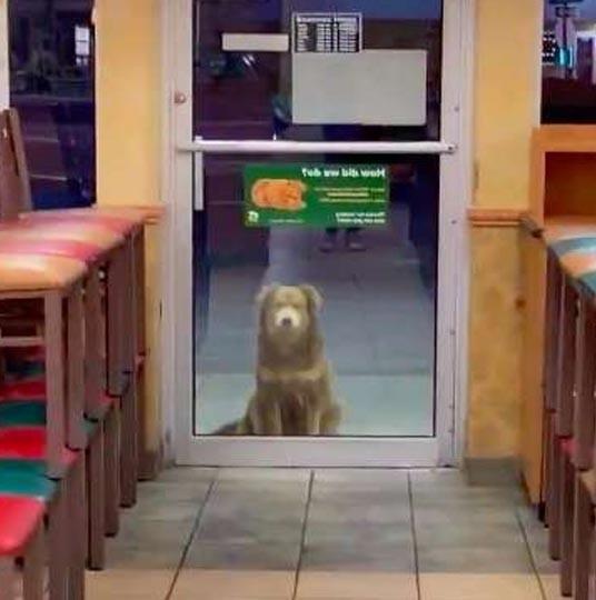 Pes za dveřmi