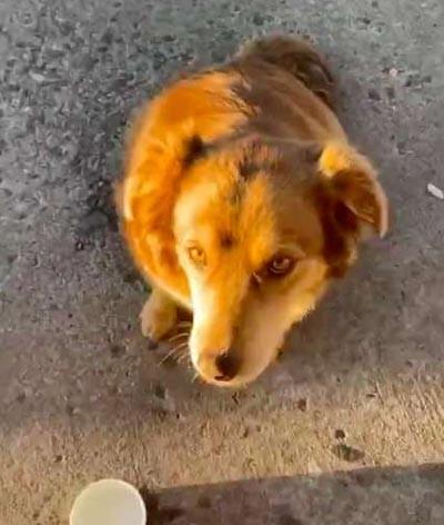 Pes na ulici, fena, smutný pes