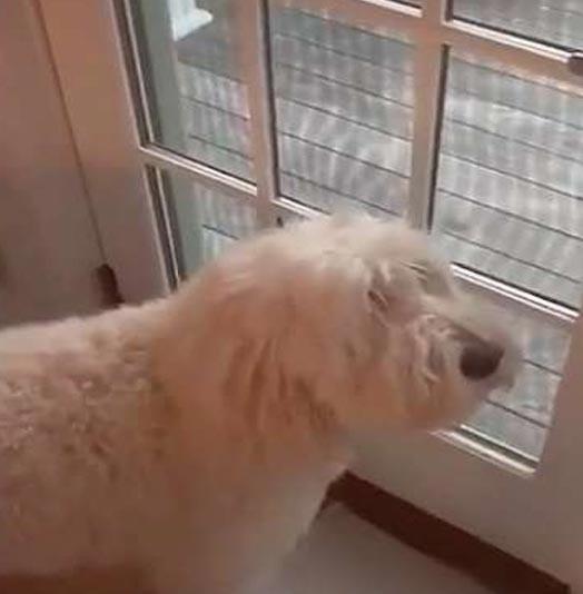 Pes sleduje kojota, oblíbená hračka