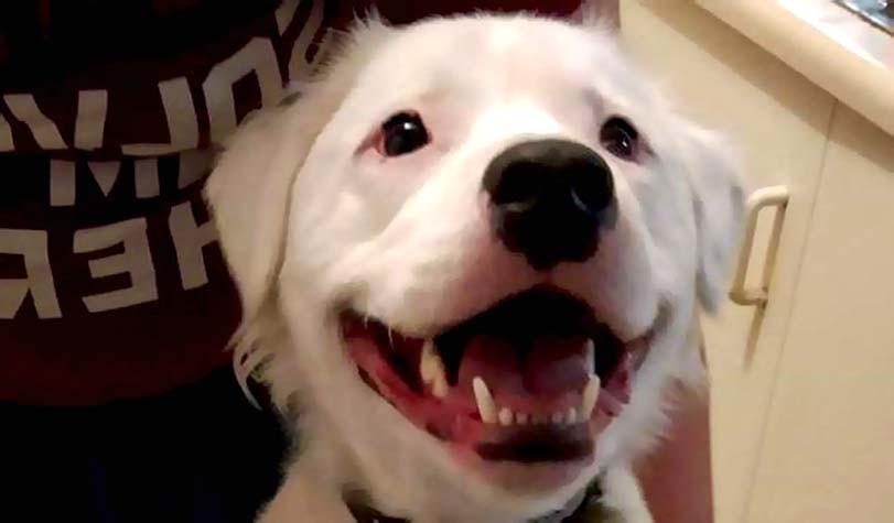 Slepý a hluchý pes