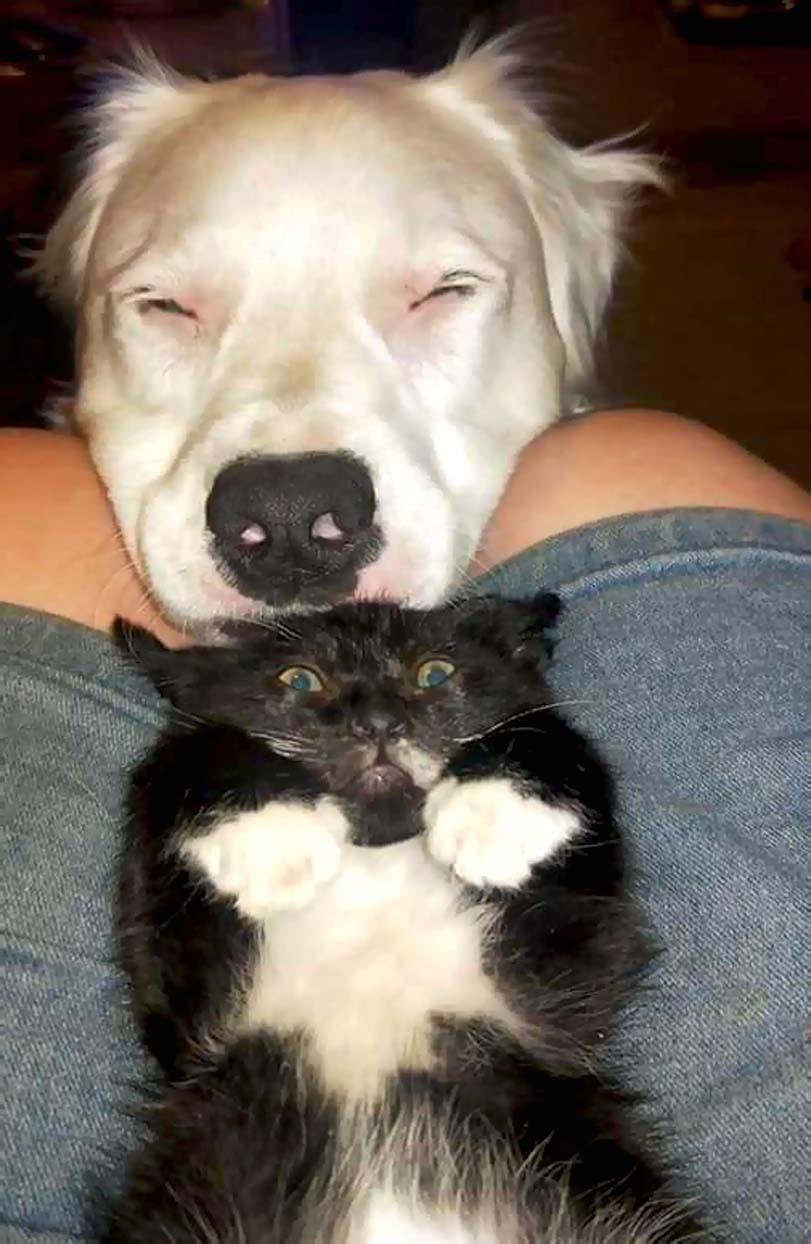 Pes uklidňuje kočku, fena