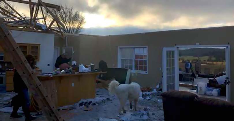 Pes v domě, tornádo, bez střechy