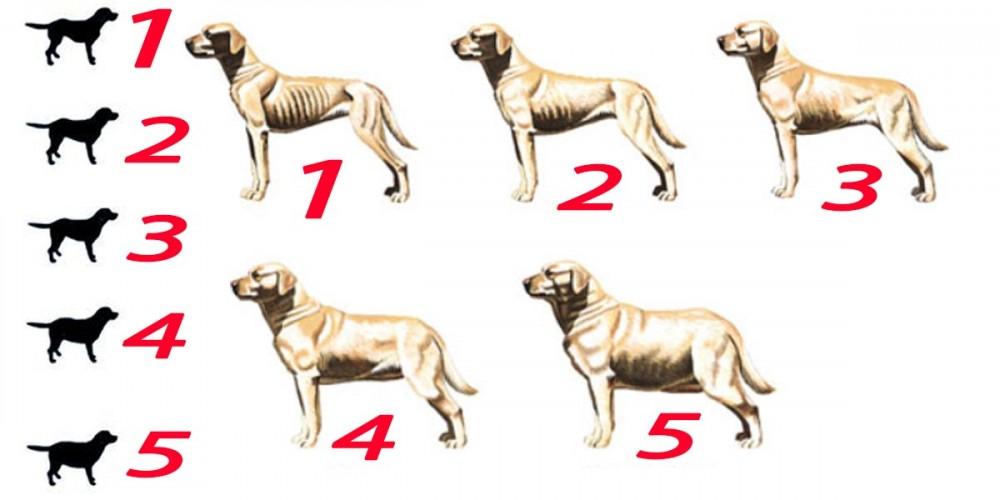 podvýživa, vyhladovělost, obezita, psi, pes, fena