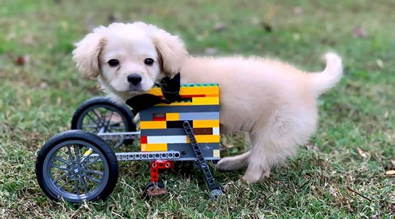 Vozítko pro psa