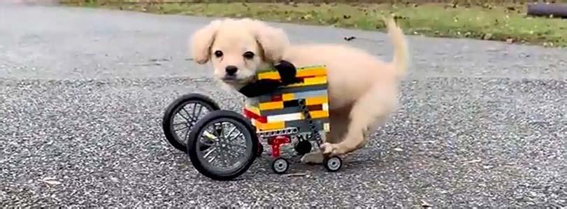 Vozítko pro psa bez hrudních končetin