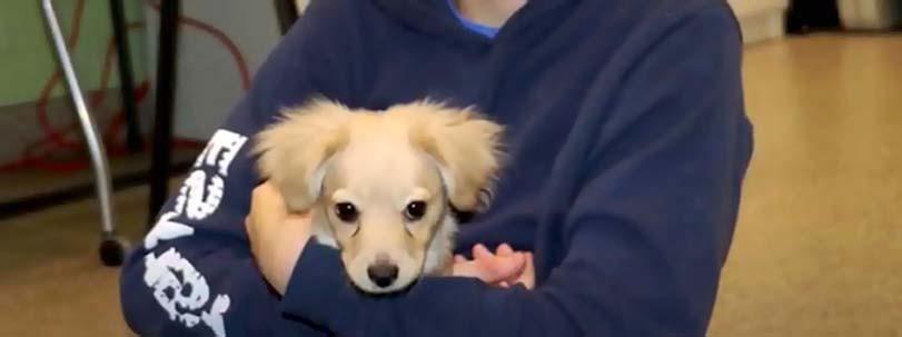 Štěně po adopci v náručí