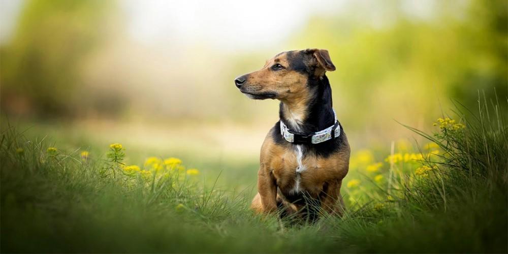 Pohled psa do strany