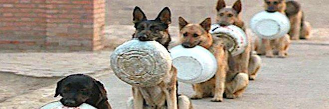 Mají psy na papilloma století