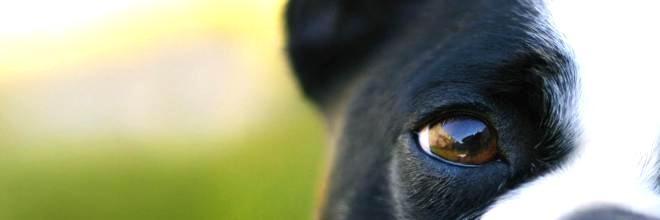 10+ úžasných citátů o psech a lidech ツ