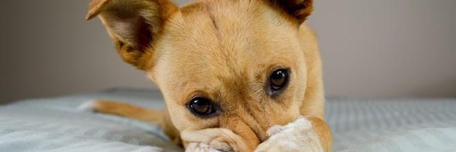 Co dělá Váš pes, když nejste doma? ツ
