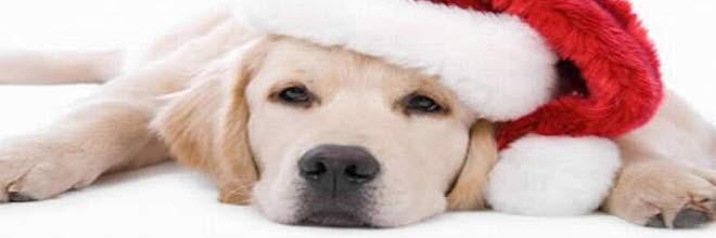 Veselé Vánoce!!! ツ