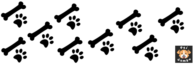 Jak psa naučit aport?