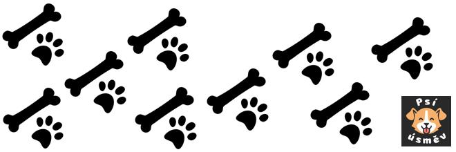 """TIP: Pokud hledáte svého prvního psa a myslíte si, že chcete psa """"opravdu chytrého"""", pak mi věřte: NECHCETE"""