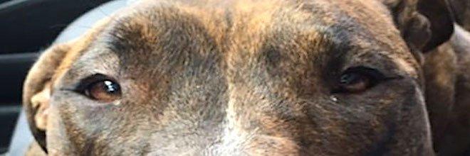 Před rokem zachránila psa, ale ten jí stále nepřestal objímat