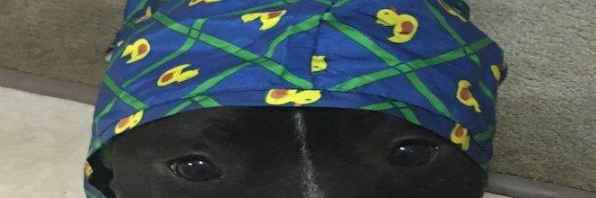Pes, který nesnášel déšť, dostal oblečení, díky kterému se cítí bezpečně