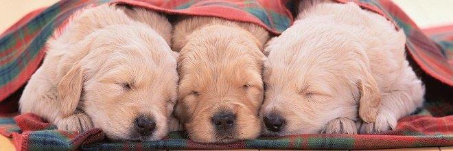 VÝZKUM: Psi mají sny vždy o jejich majitelích