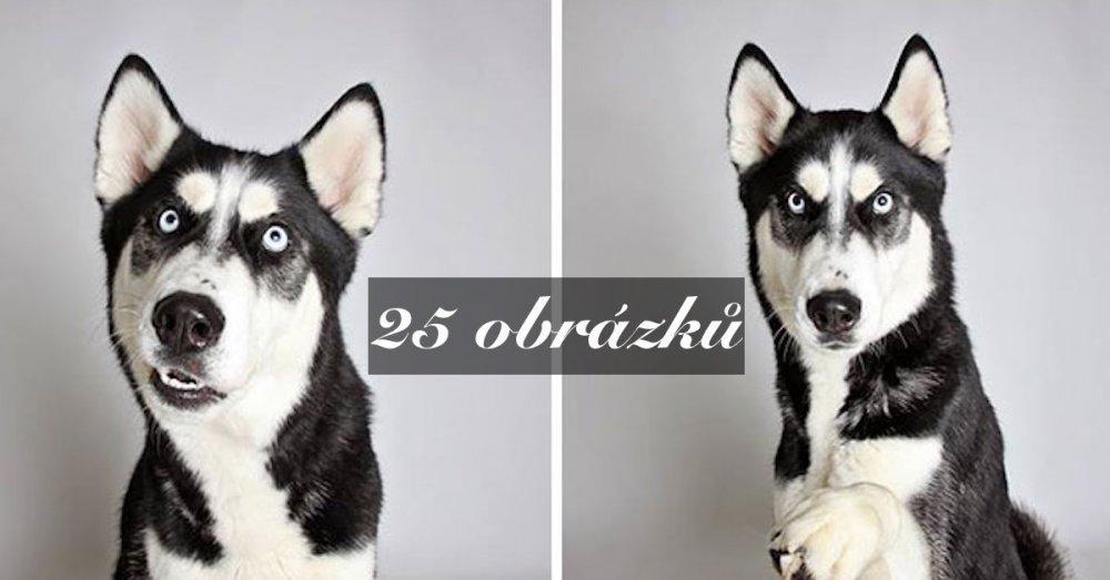 """Útulku závratně pomáhají psí obrázky """"z fotobudky"""", adopce je rekordní"""